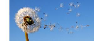 ventos